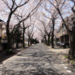 Tokyo Photodiary April-May 2012 Part 2