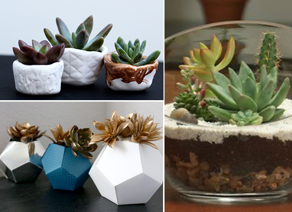 diyhostessgifts_succulents