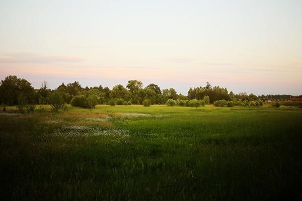 glitterthorn_field