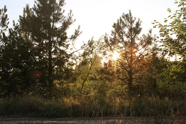 glitterthorn_forest