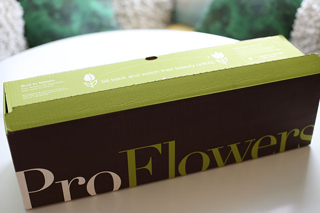 proflowers-box-proflowers-review-chic-steals
